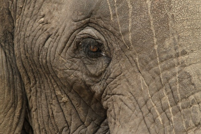 Tanzania and Kenya - Here's Why They Go Together - Ker & Downey - Elephant Wildlife