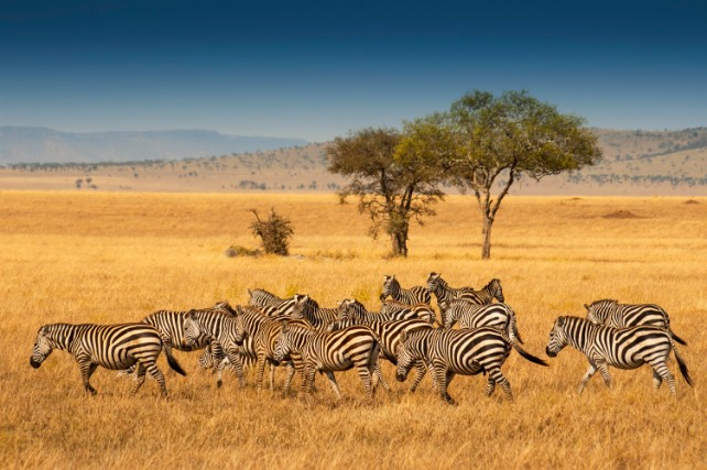 Tanzania and Kenya - Here's Why They Go Together - Ker & Downey - Serengeti Wildlife