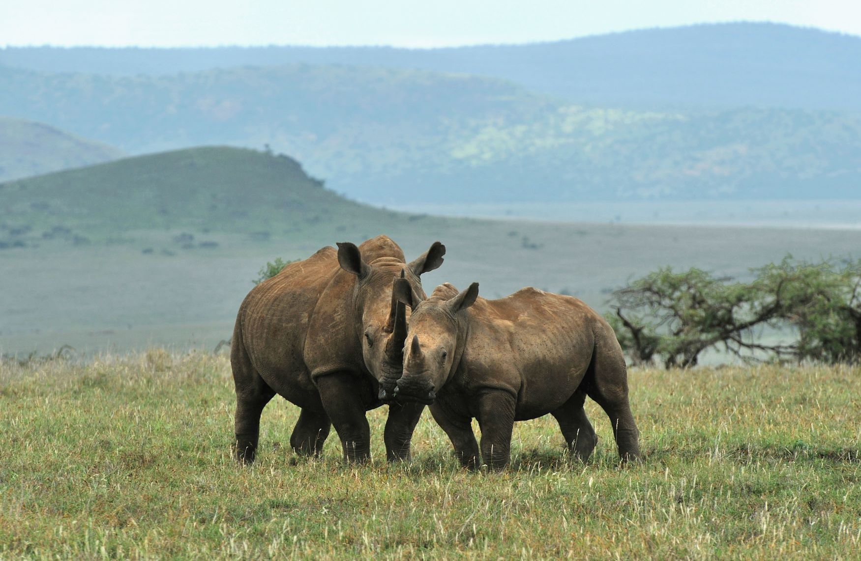Rhino Philanthropy Project | Ker & Downey Supports Rhinos Without Borders