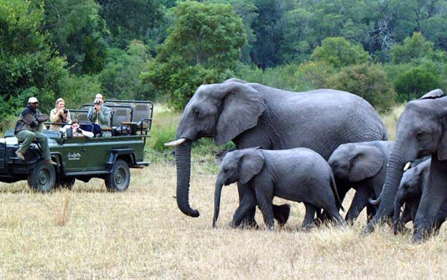 South-African-Safari-for-the-Family-Top-5-Picks-from-Ker-Downey-Elephant-Family