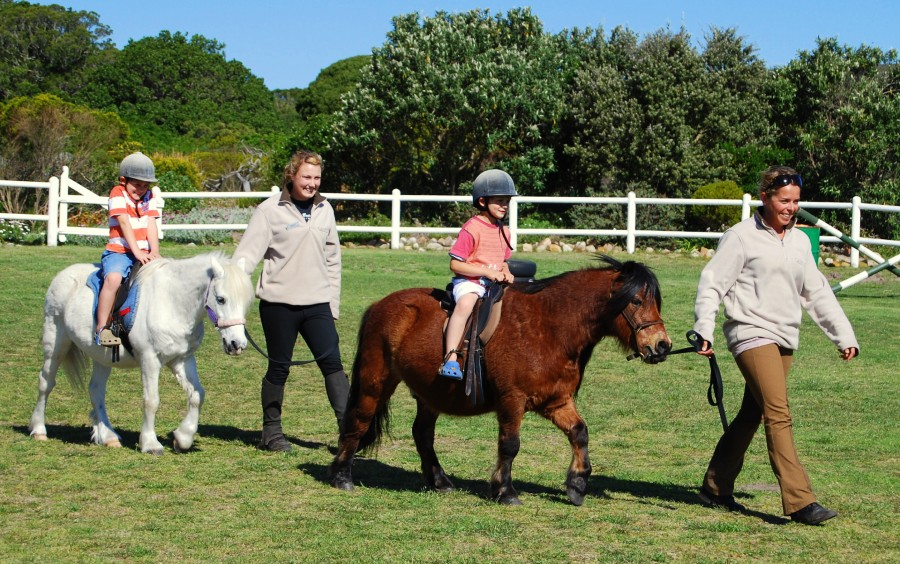 South-African-Safari-for-the-Family-Top-5-Picks-from-Ker-Downey-Shetland-Ponies
