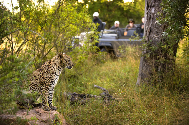 Kruger Safari: Everything you Need to Know